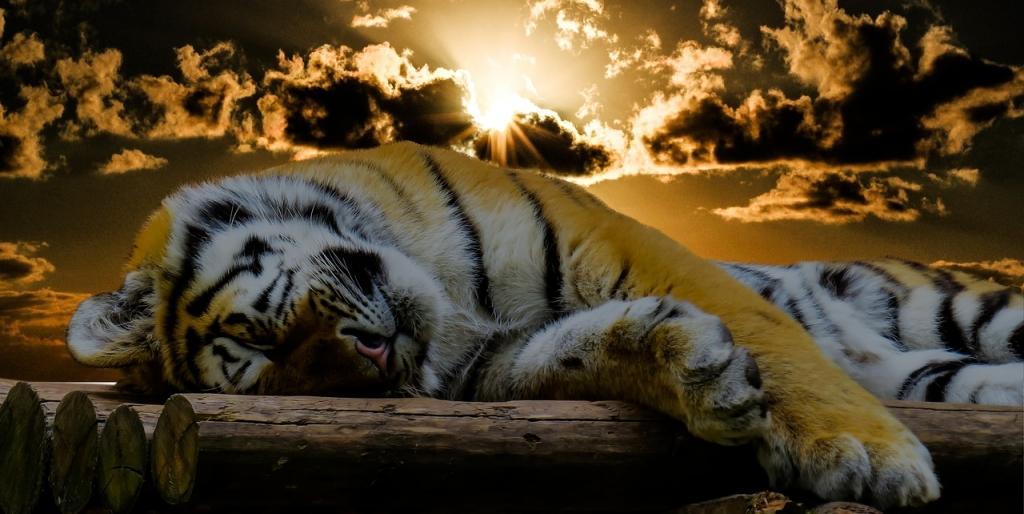 Kaikki eläimet nukkuvat, miksi me emme siis nukkuisi riittävästi? Miksi emme kunnioita unta?